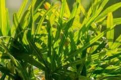 Welche Erde Für Palmen : palme mit pilzbefall so gehen sie dagegen vor ~ Watch28wear.com Haus und Dekorationen