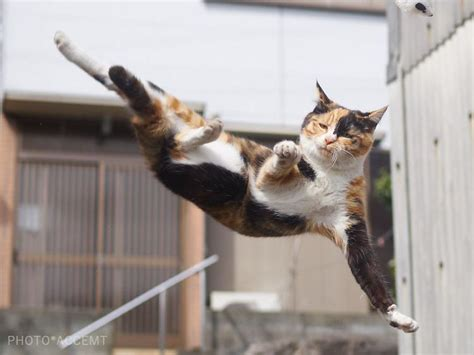 japanese photographer captures cats  kung fu moves