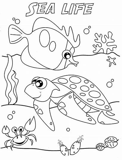 Coloring Underwater Pages Sea