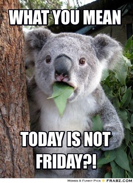 Today Is Friday Meme - what you mean surprised koala meme generator captionator