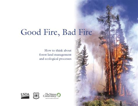 good fire bad fire     forest land