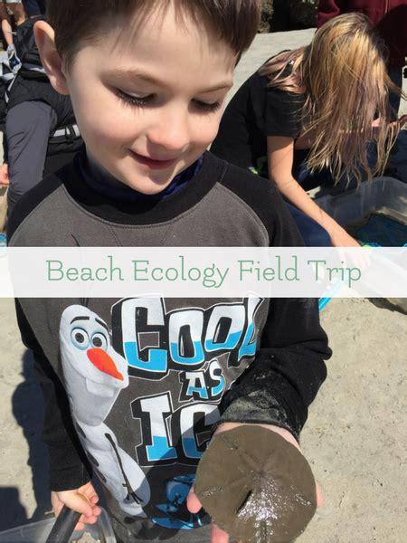 Beach Ecology Nature Study Field Trip Tybee Island