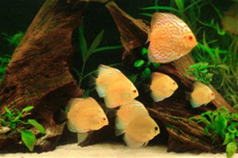 wie warm muss ein aquarium sein wie warm muss ein aquarium sein anhaltspunkte f 252 r s 252 223 und salzwasser