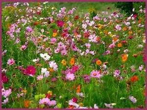 jai cueilli un sourire coco magnanville With tapis champ de fleurs avec canapé grand confort