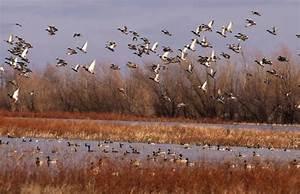 Arkansas Duck Hunting Guide Service