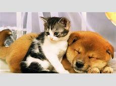 Hunden und katzen hintergrundbilder HD Hintergrundbilder