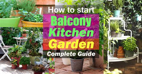 how to start a garden how to start a balcony kitchen garden complete guide