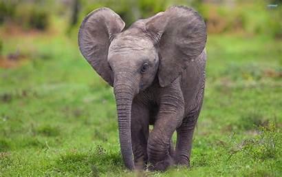 Elephant Wallpapers Desktop Backgrounds Animal Resolution Animals
