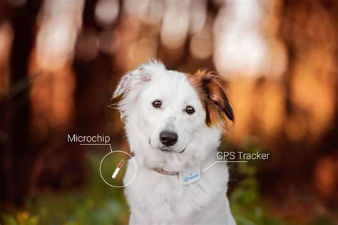 dog tracking device  microchip   differences