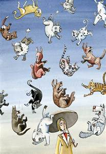 raining cats and dogs it is raining cats and dogs derek roczen s weblog