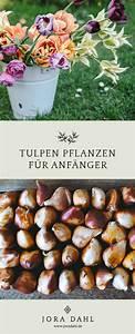 Tulpenzwiebeln Im Frühjahr Pflanzen : tulpen pflanzen und pflegen tulpen pflanzen tulpen und pflanzen ~ A.2002-acura-tl-radio.info Haus und Dekorationen