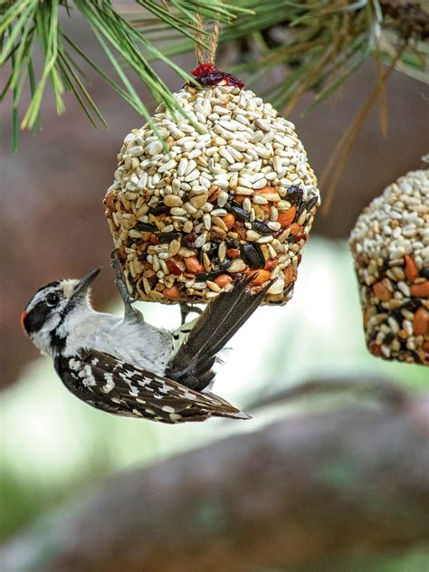 cupcake bird seed ornaments songbird tweets gardenerscom
