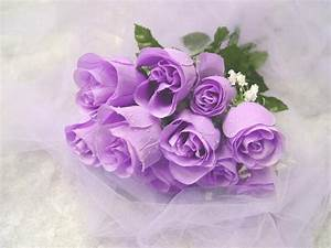 Magnificent Purple Roses - Roses Wallpaper (34611048) - Fanpop