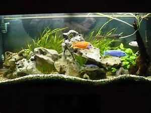 Aquarium Berechnen : aquarium plauderecke heisse eisen foren auf ~ Themetempest.com Abrechnung
