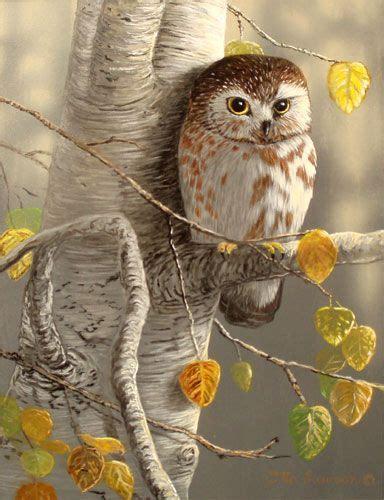 images  amazing owls  pinterest