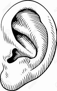 Human Ear Drawing At Getdrawings