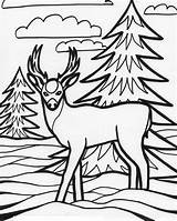 Coloring Deer Pages Printable Animal Animals Wild Sheet Education Books sketch template