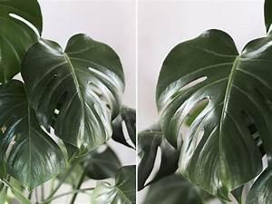 Grande Plante Verte D Intérieur : entretenir ses plantes vertes d 39 int rieur astuces et conseils pour avoir la main verte ~ Voncanada.com Idées de Décoration