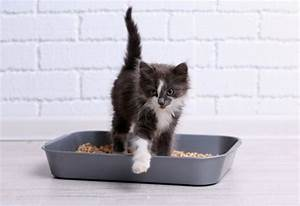 6 reasons your cat is peeing outside the litter box petmd for Can you train a cat to go outside for bathroom