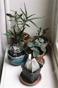 succulents | Cacti & Succulent love | Pinterest