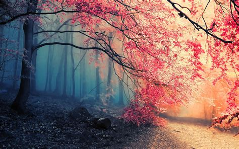 1803 Forest HD Wallpapers | Background Images - Wallpaper ...
