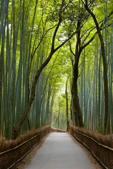 beautiful forests   world id love