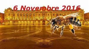 Foire De Toulouse : agenda animations foires toulouse agenda toulouse ~ Mglfilm.com Idées de Décoration