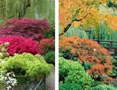 Japanischer Garten Pflanzen : japanische ahorn gartencenter shop24 ~ Markanthonyermac.com Haus und Dekorationen