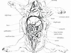 Fetal Pig Nervous System Diagram  U2013 Notasdecafe Co