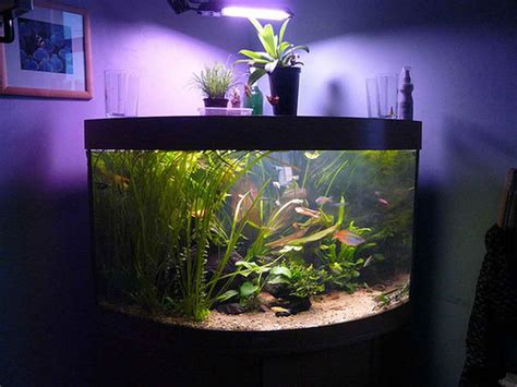unique fish aquarium decor aquarium design ideas