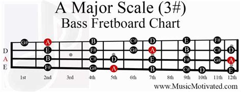 major scale charts  guitar  bass