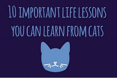 Lessons Important Cats Learn