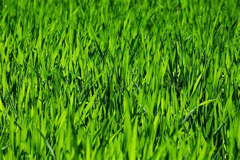venta de follaje artificial  instalacion de muros verdes