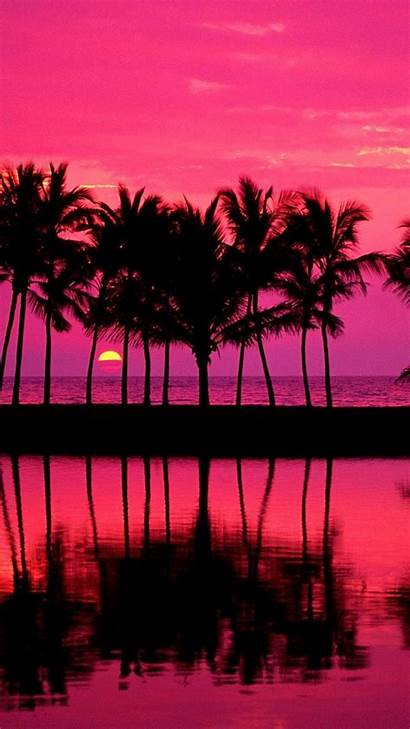 Girly Iphone Wallpapers Pretty Pink Palm Trees