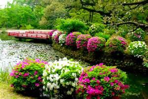 bush ideas best bushes shrubs for simple landscaping design idea