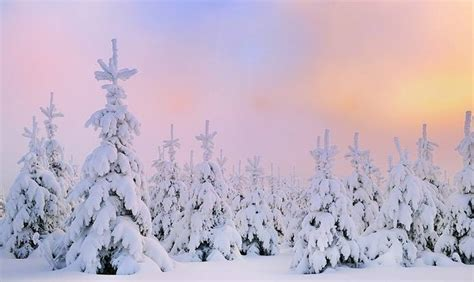 winter christmas theme download free windows 10 winter themes for this christmas