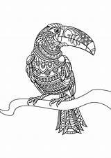 Toucan Oiseaux Gratuit Coloriage Livre Motifs Jolis Adultes Animaux Coloriages Difficiles sketch template