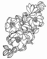 Magnolia Flower Flowers Drawing Coloring Magnolias Drawings Pattern Florals Jumper Ink Tattoo Colouring Floral Morning Louisiana Via Clip State Steel sketch template
