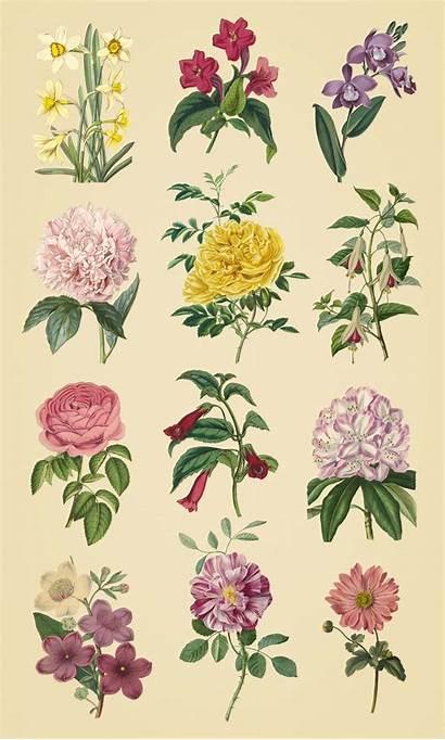 Herbarium Illustrations Garden Diy Buddha Useful Pixel