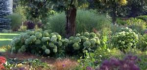 Welche Pflanzen Passen Gut Zu Hortensien : schneeballhortensie online kaufen hortensientr ume ~ Lizthompson.info Haus und Dekorationen
