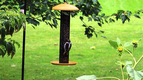 finch bird feeder placement birdcage design ideas