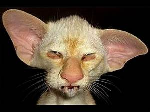 8 Ugliest Cats In The World - Scary Stuff - YouTube