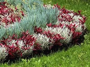 Parterre De Plante : parterre de fleurs vivaces du japon et des fleurs ~ Melissatoandfro.com Idées de Décoration