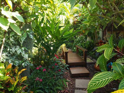 5 Tropical Plants For Sydney  Robin Powell