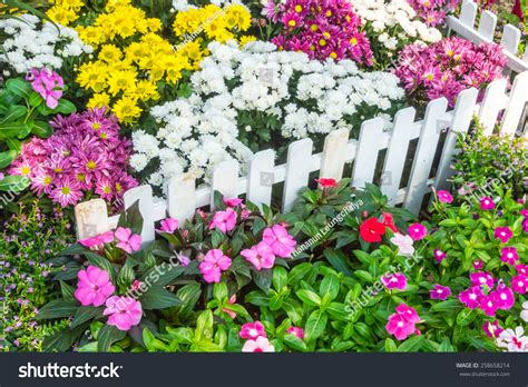 white picket fence surrounded by flowers stock photo