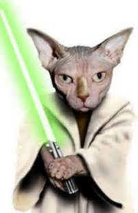 wars cats yoda archives wars catsstar wars cats