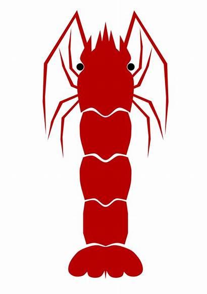 Shrimp Clipart Clip Boil Silhouette Cliparts Creature