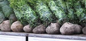 Wann Johannisbeeren Pflanzen : wann schneide ich kirschlorbeer wann und wie schneide ich lavendel doovi b ume schneiden obi ~ Orissabook.com Haus und Dekorationen