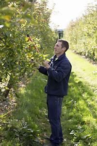 Apfelbaum Schneiden Sommer : apfelbaum schneiden anleitung vom experten plantura ~ Lizthompson.info Haus und Dekorationen