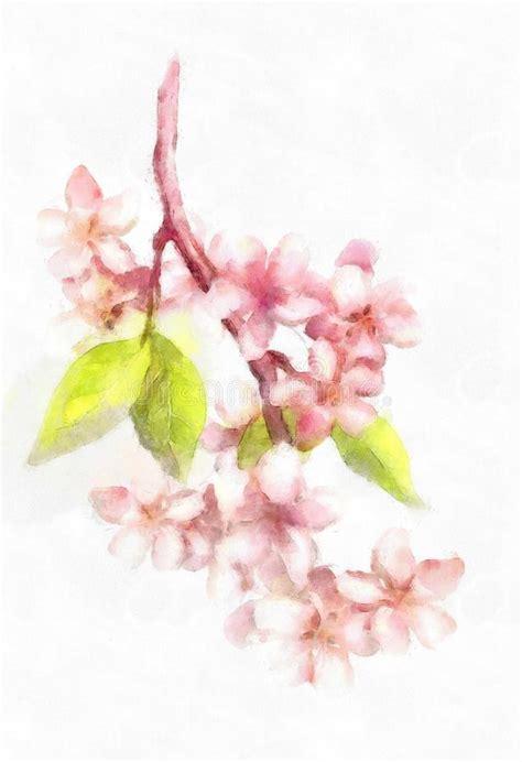 Watercolor Botanical Illustration Branch Of Apple Blossom